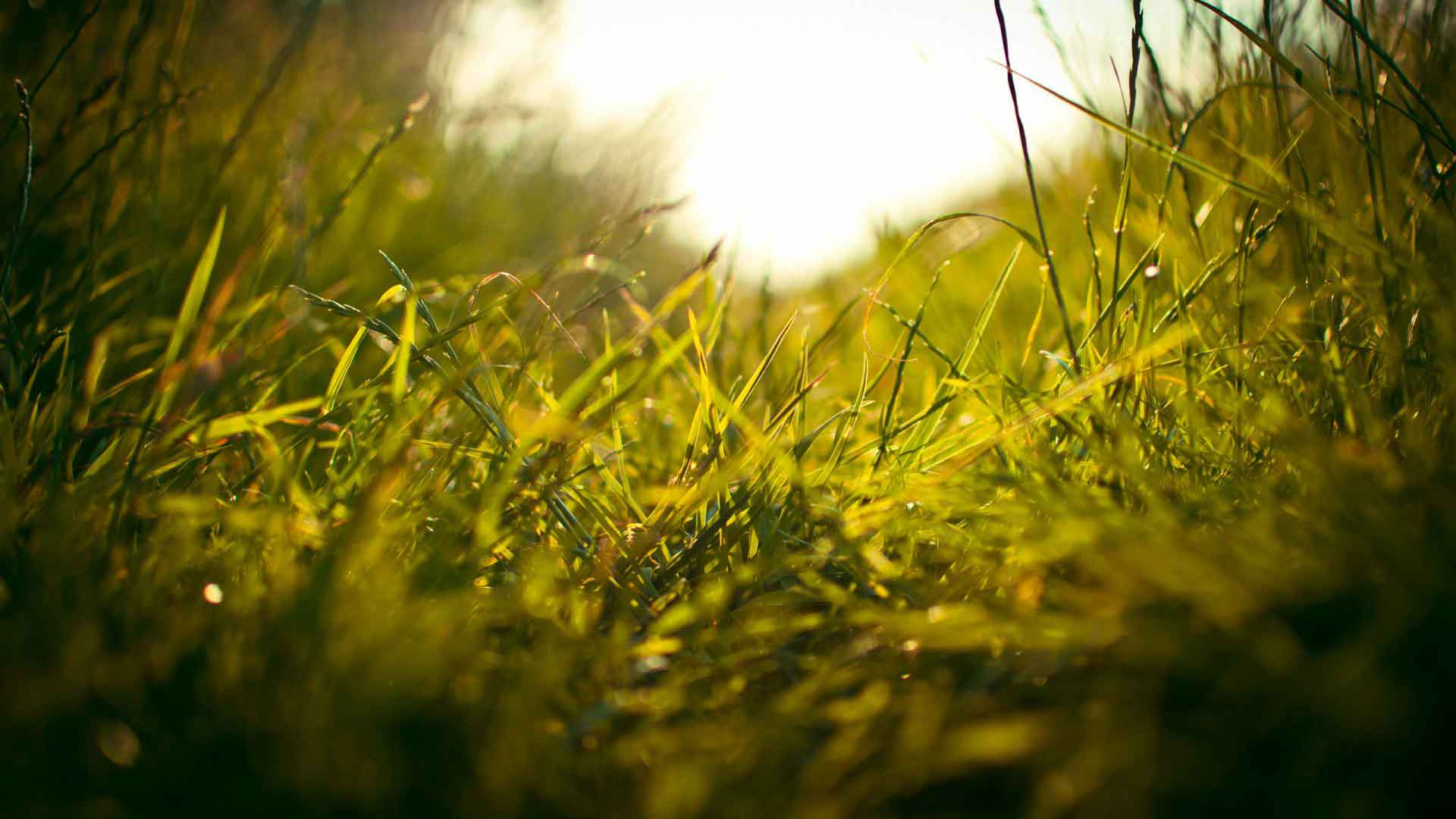 Closeup of grass in summer or spring field